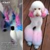 Pink & Blue Dog