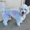 Blue & Purple Dog